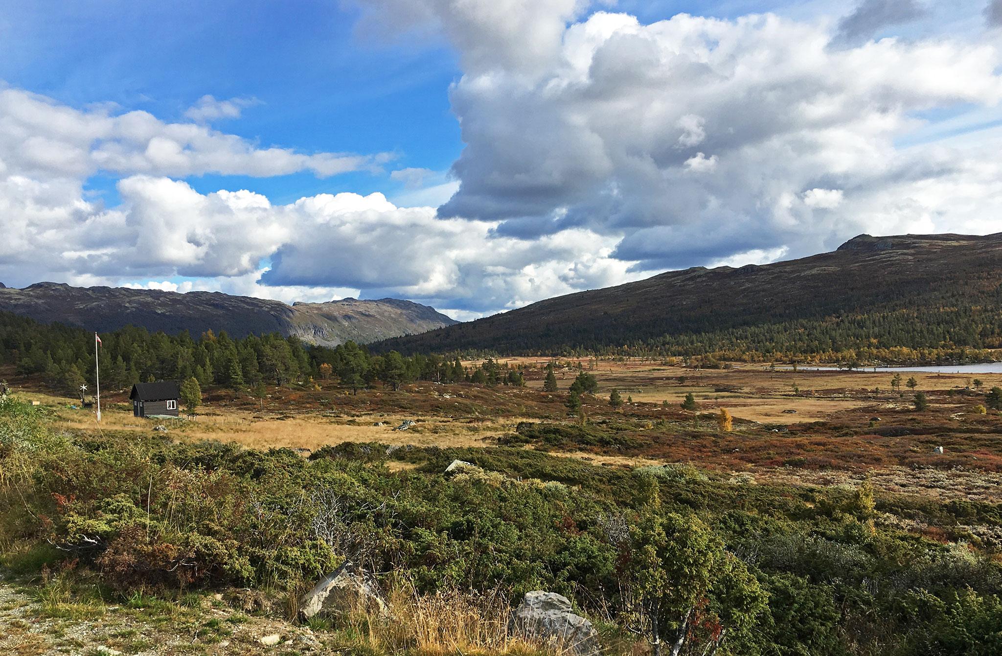 Dagali nature in Autumn splendour