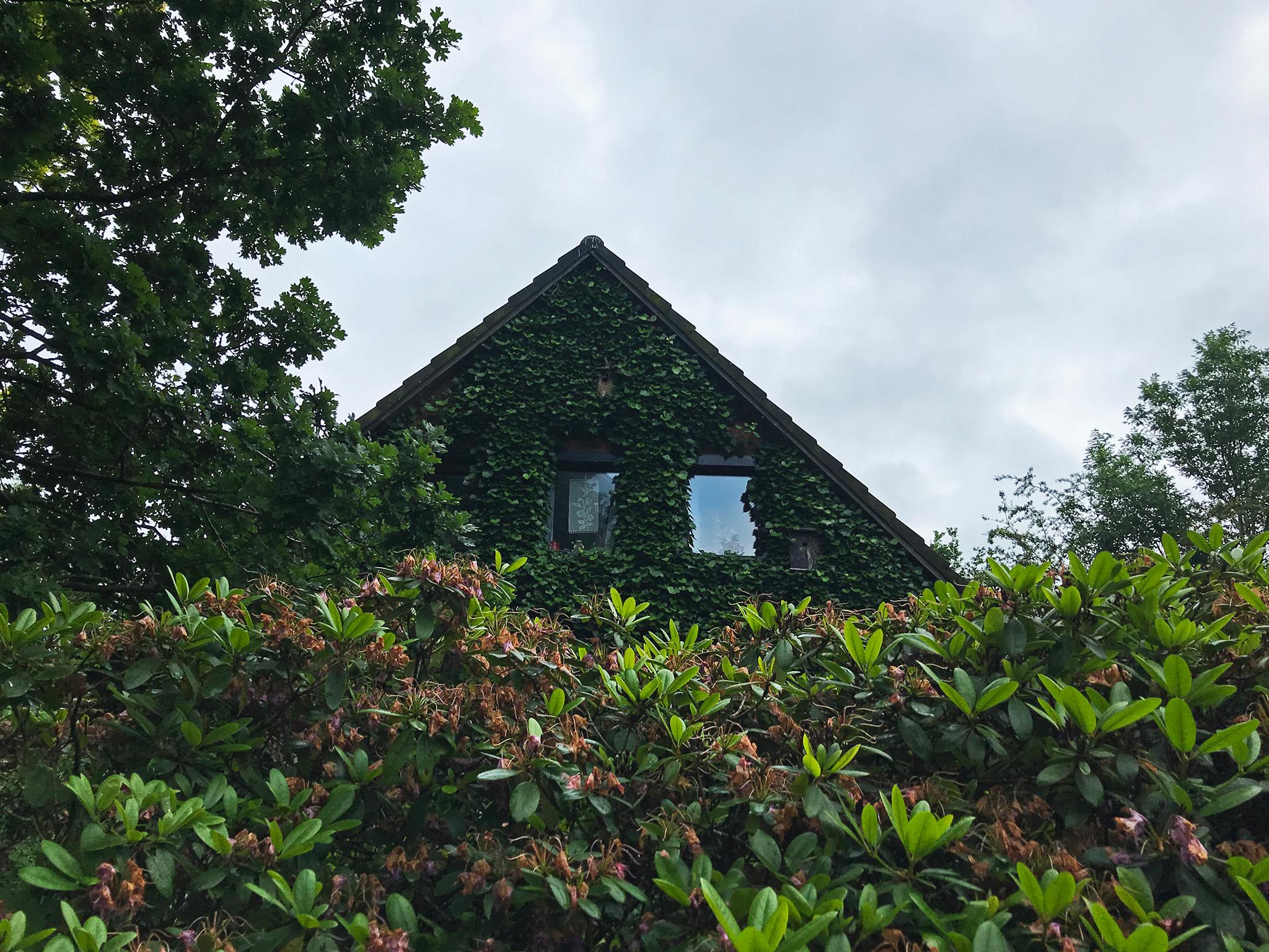 Overgrown house in Struckum