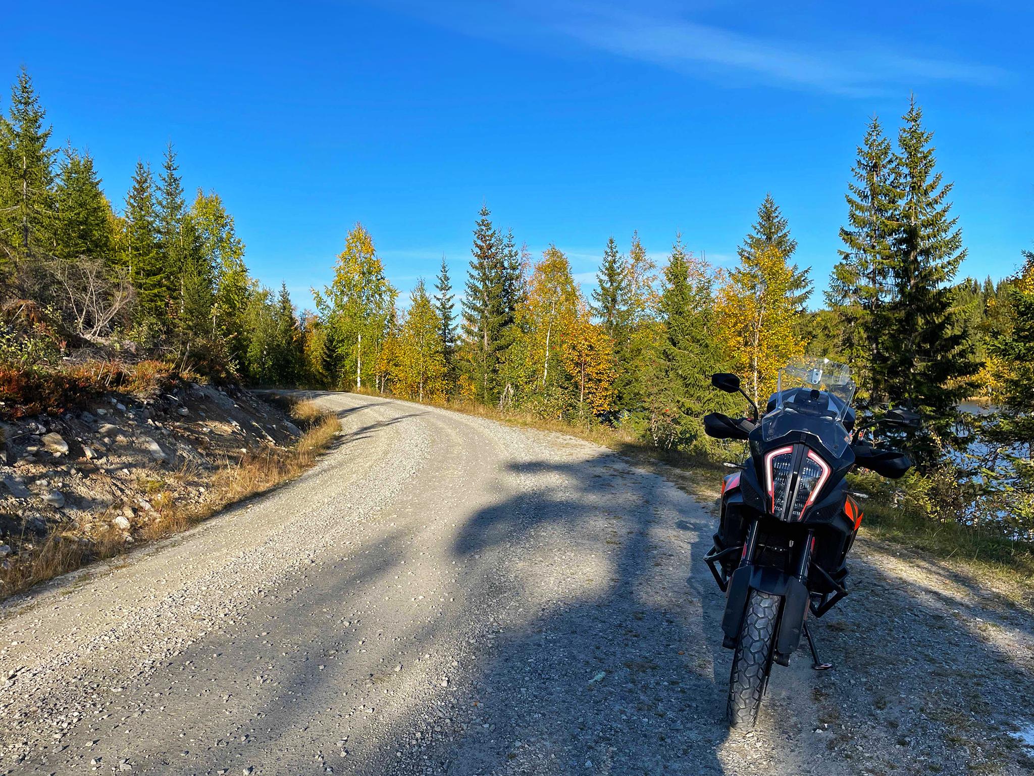 Norwegian Wood, late September