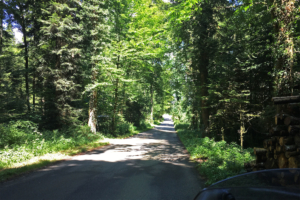 Found a nice small road that ran through some dense woodlands.