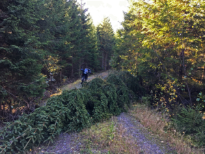 Norwegian wood tracks September